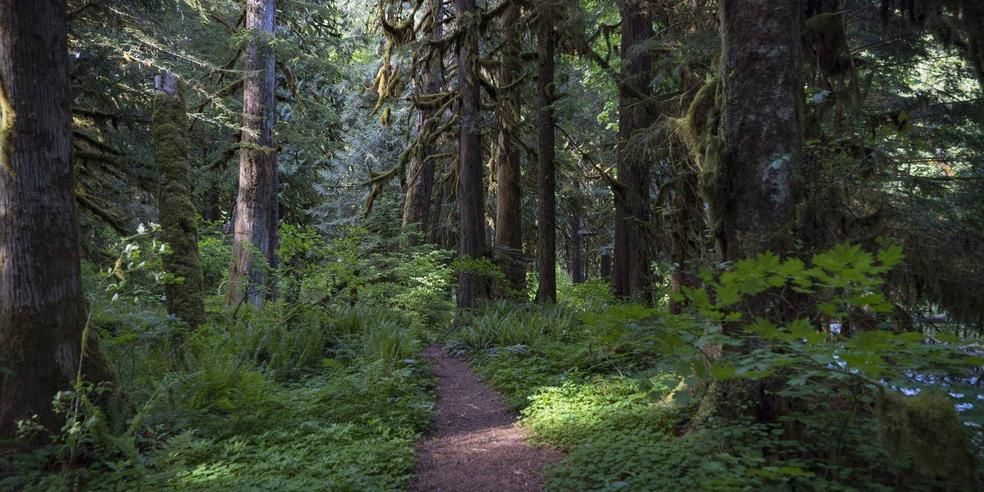 Trail in Mt. Hood National Forest