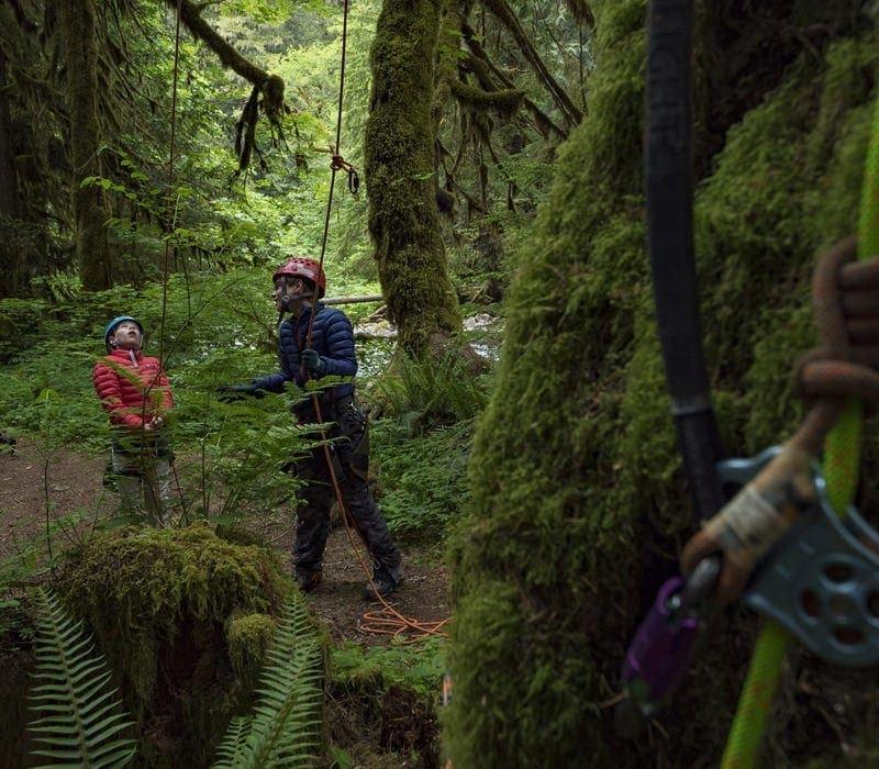 Kids prepare to climb tree