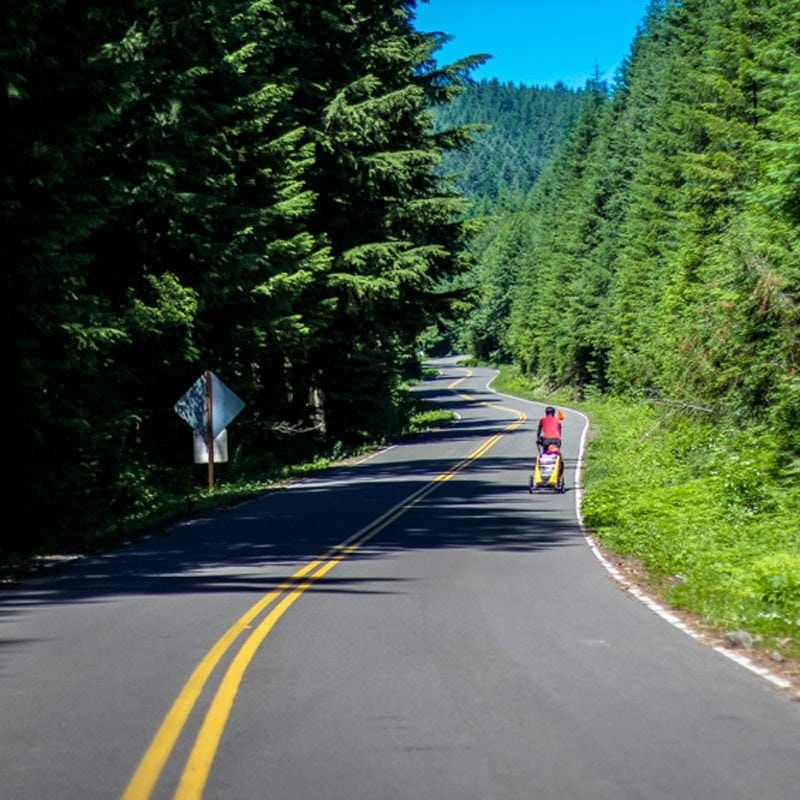 Pines cast shadows over cyclist on Cascading Rivers Scenic Bikeway