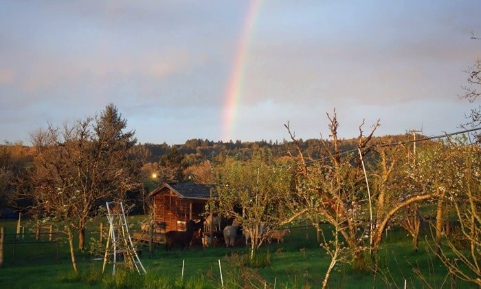 Rainbow over Low Heaven Farm in McMinnville