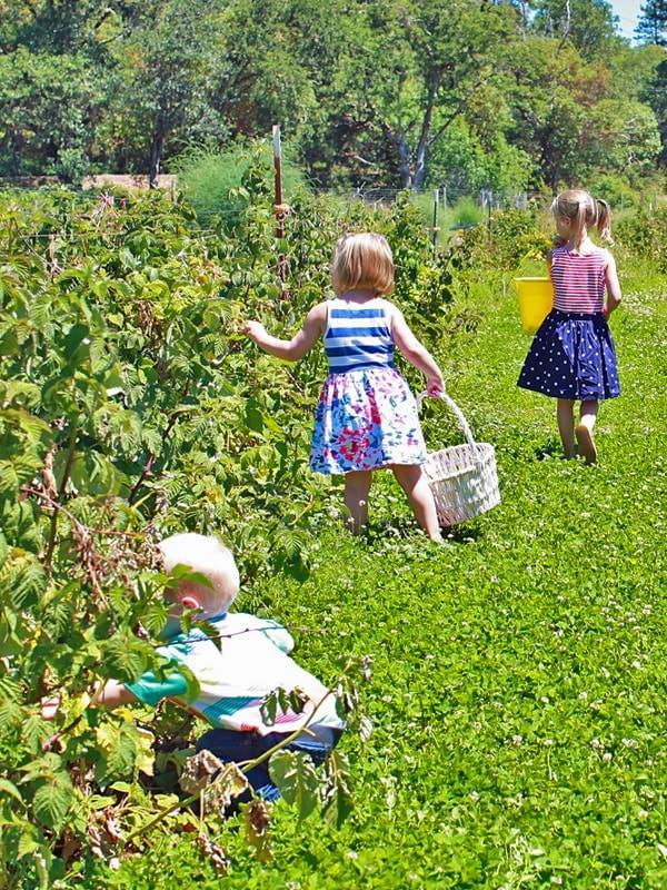 Three little ones picking blueberries