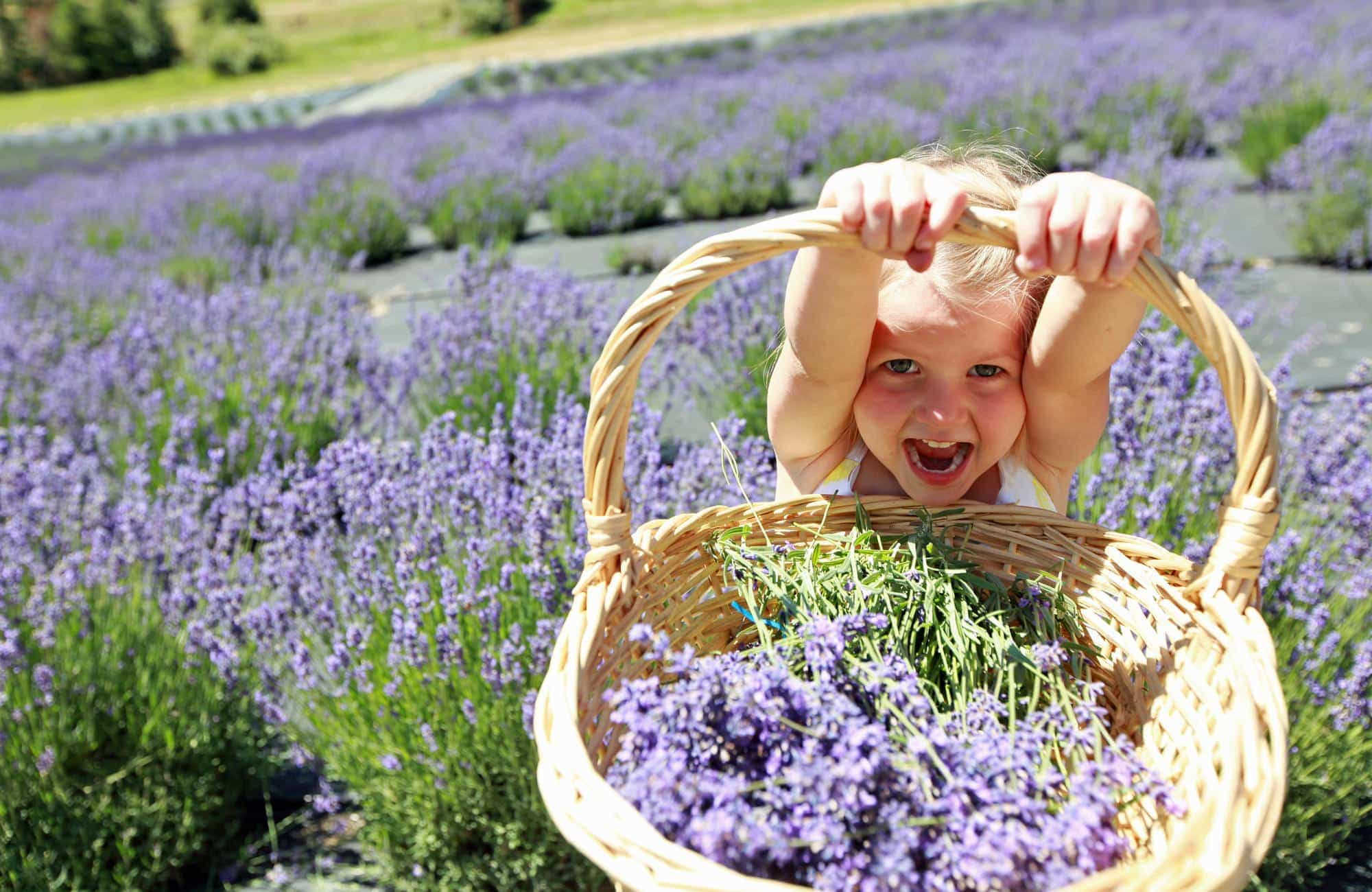 Daughter proudly holding basket of lavender
