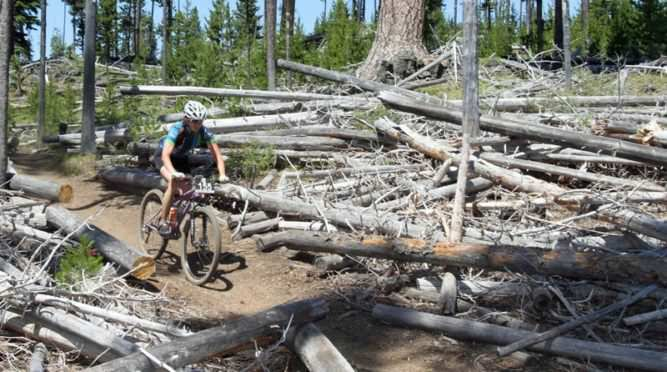 Mountain biker pedals through trees.
