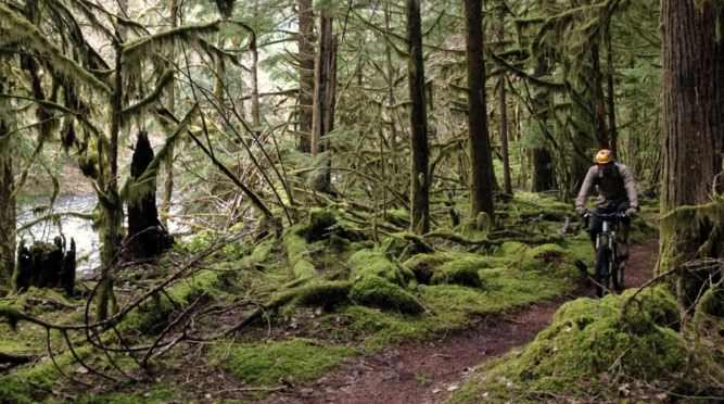 Mountain biker pedals through mossy forest on McKenzie River Trail