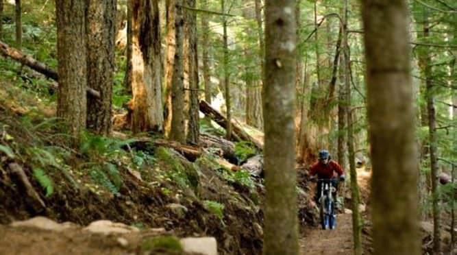 Mountain biker pedals through woodsy path.