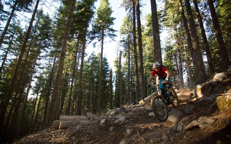 Mountain biker speeds down Mt. Ashland trail.