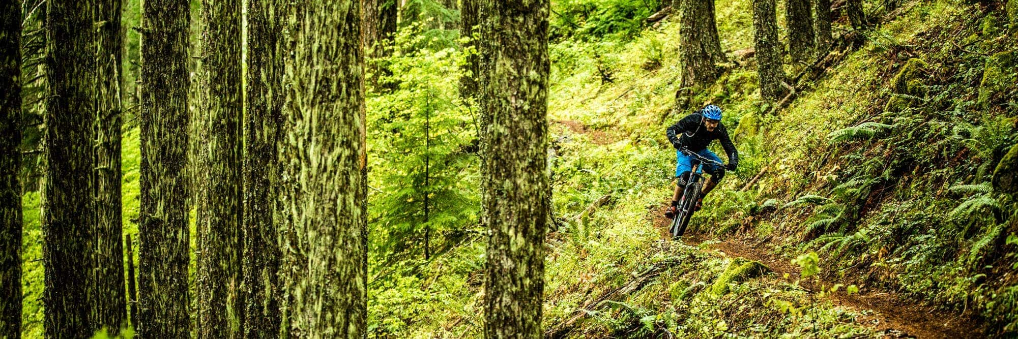 Mountain Biking Hot Spots In The Willamette Valley Travel Oregon