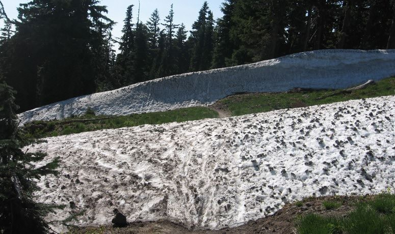 Timberline to Town Trail