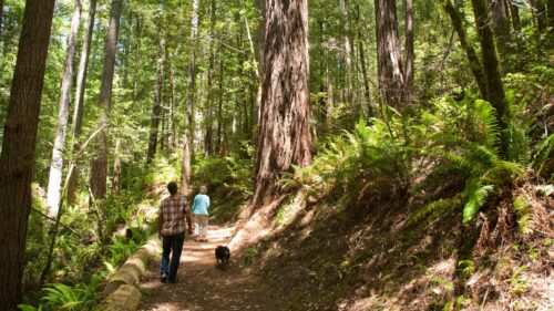 Oregon Redwood Trail (Photo by Robbie McClaran)
