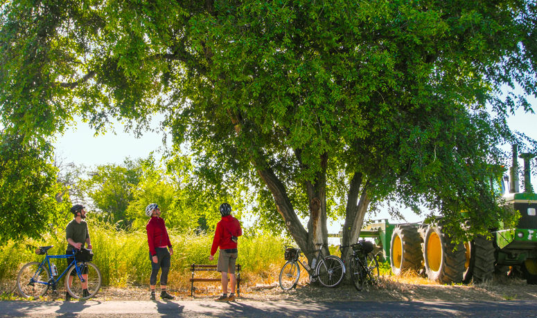Photo of bikers standing under tree- Madras Mt. View bikeway
