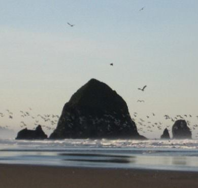 Haystack Rock with birds