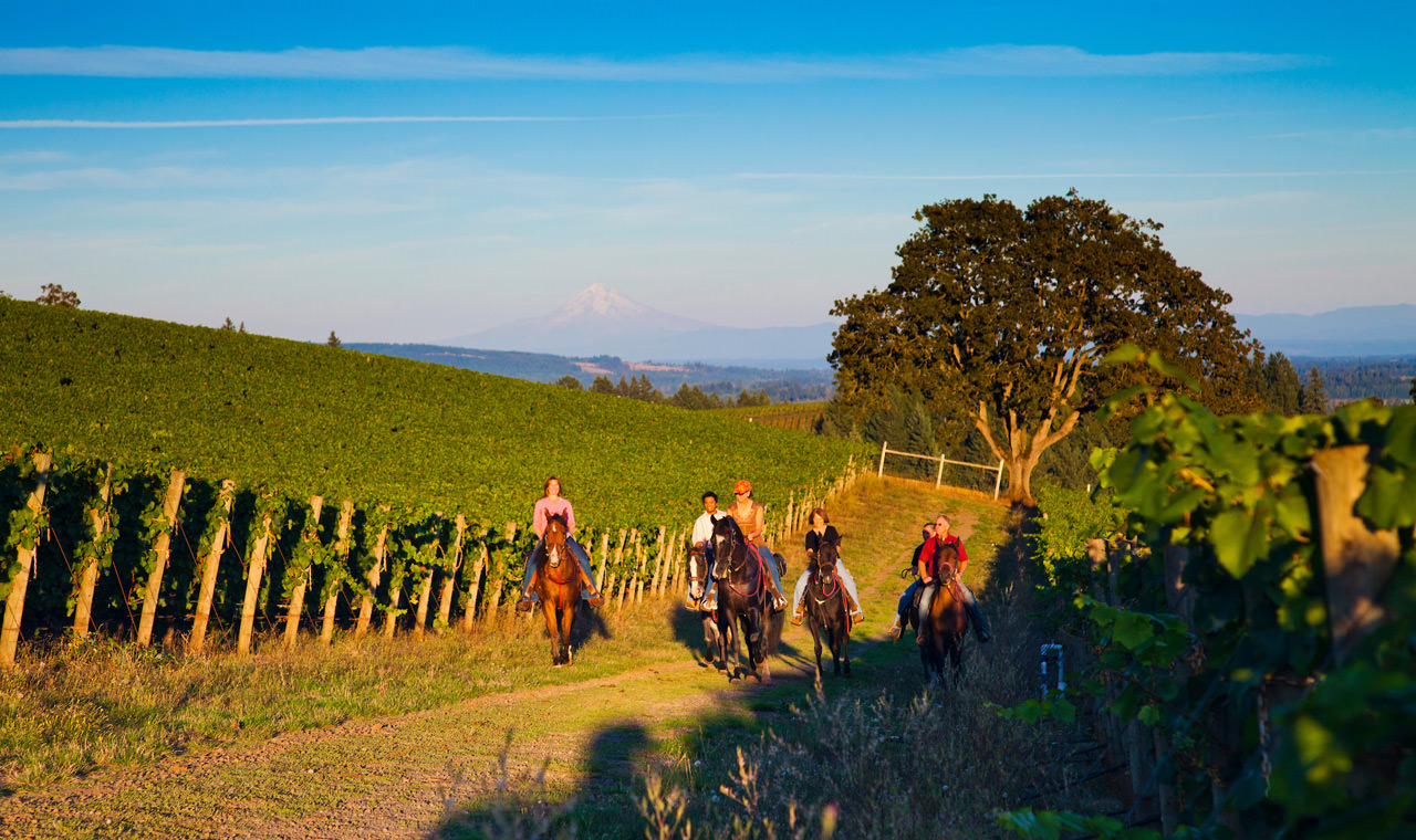Imagine yourself riding horseback with five friends through the vineyard.