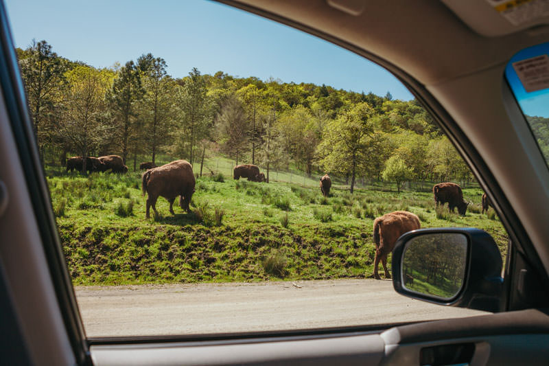 See animals grazing as you drive by at Wildlife Safari.