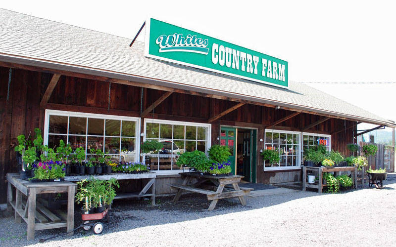 "A green sign reads ""Whites Country Farm."""