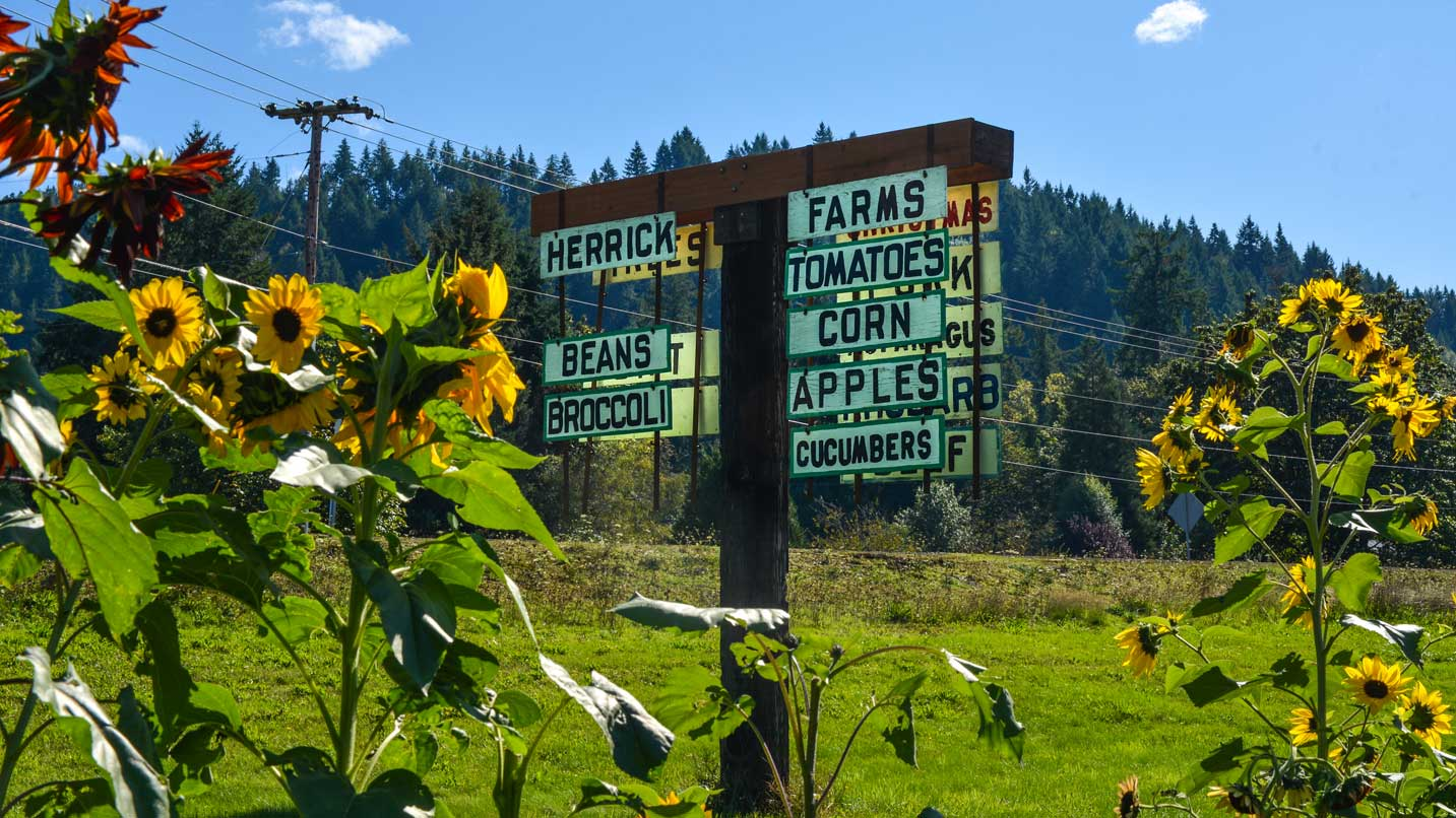 Sunflowers frame a farm sign.