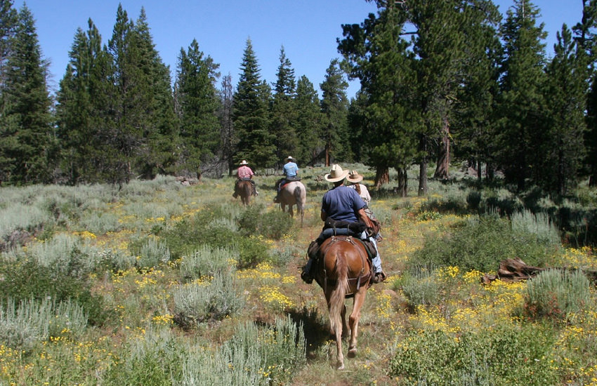 A group of horseback riders ride away in a single line through sagebrush