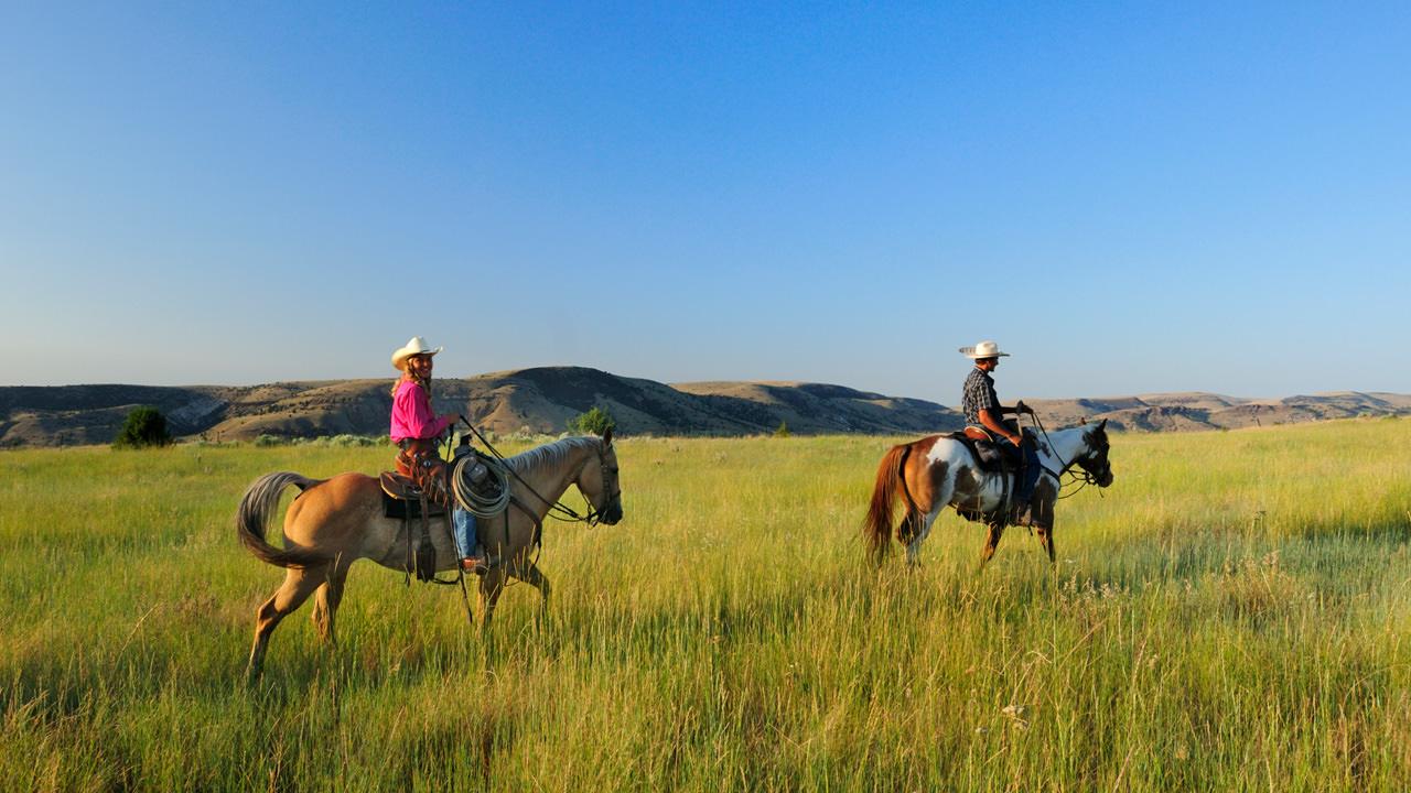 Two horseback riders in a field