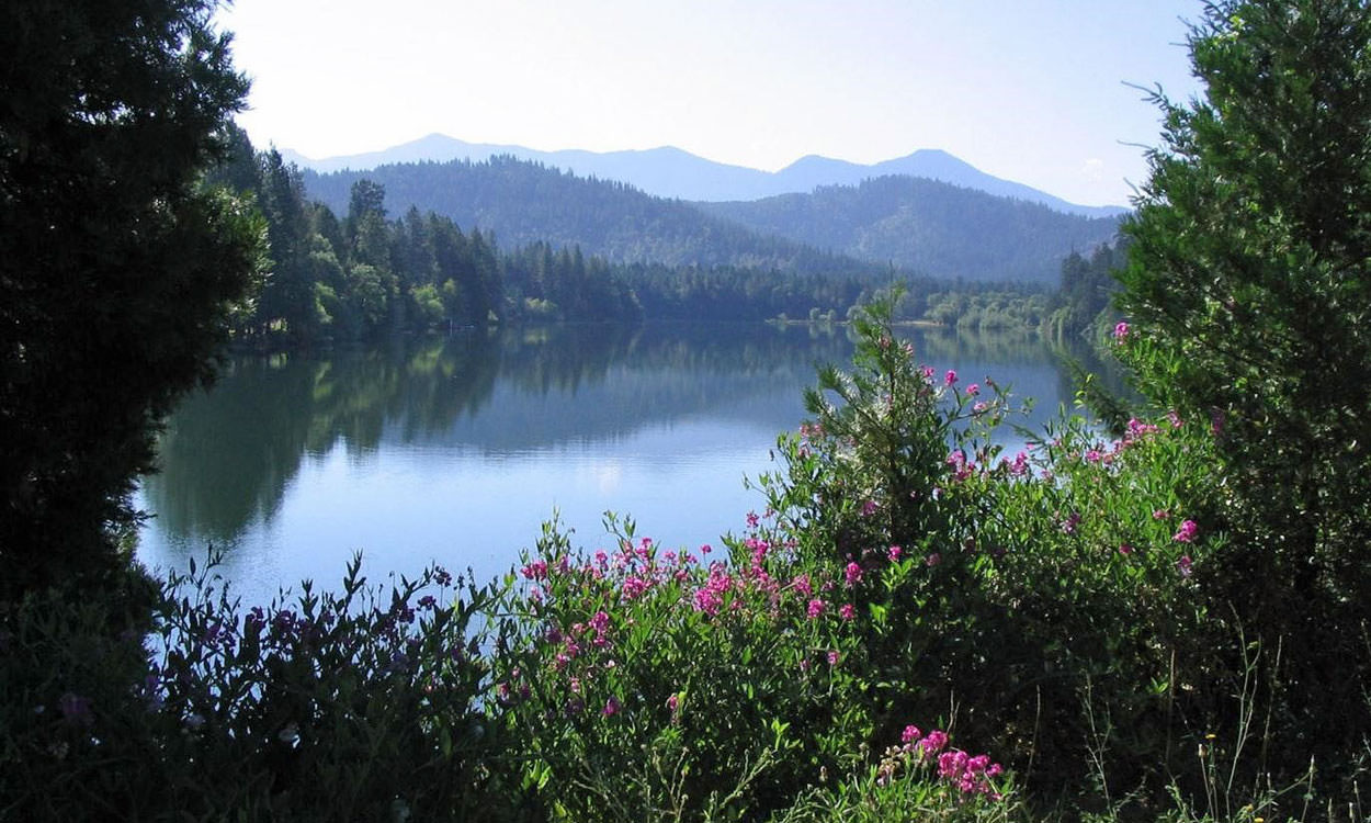 Pink wildflowers and trees frame the blue alpine lake.