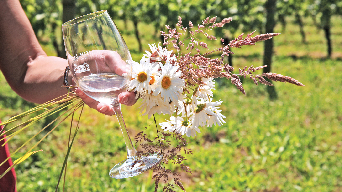 A person holds a glass of white wine in a vineyard