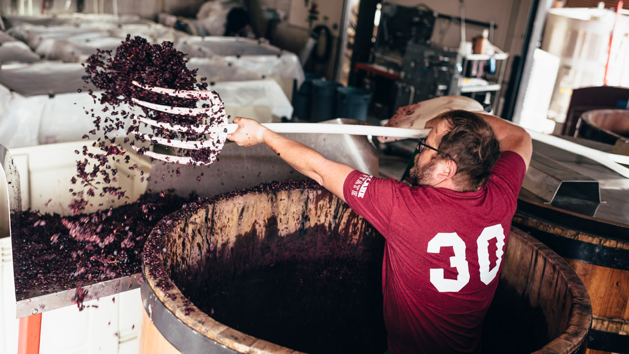 A winemaker shovels juicy grapes out of the barrel.