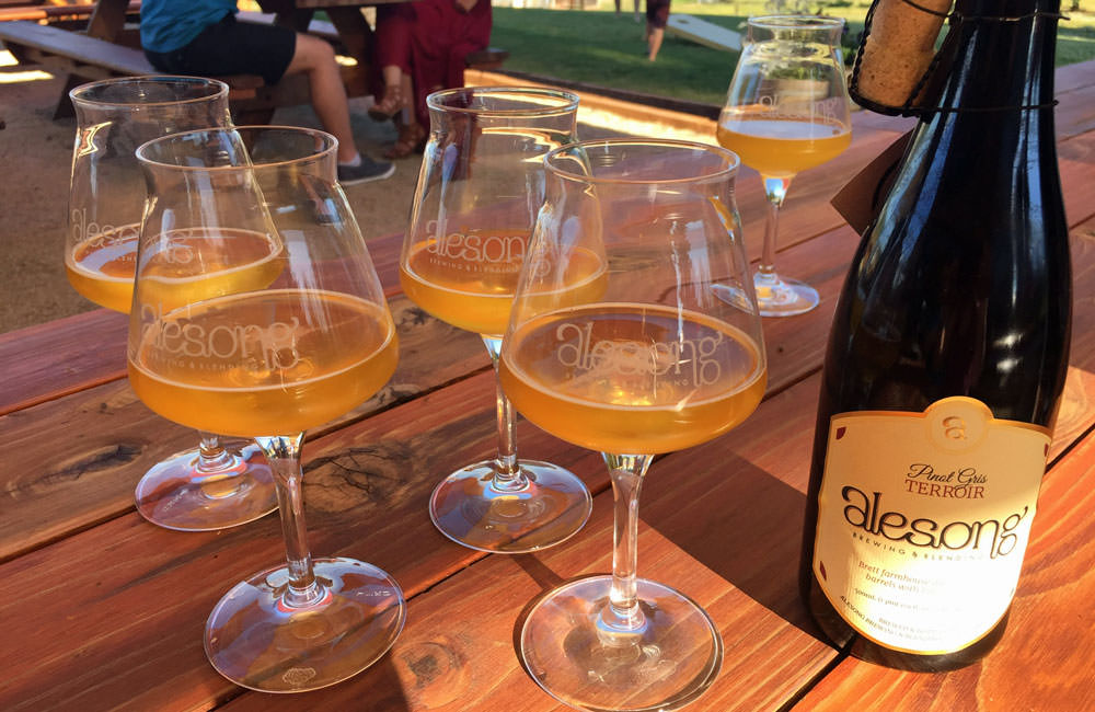 Glasses of Alesong's pinot gris terrior farmhouse ales look like wine with rich colors.