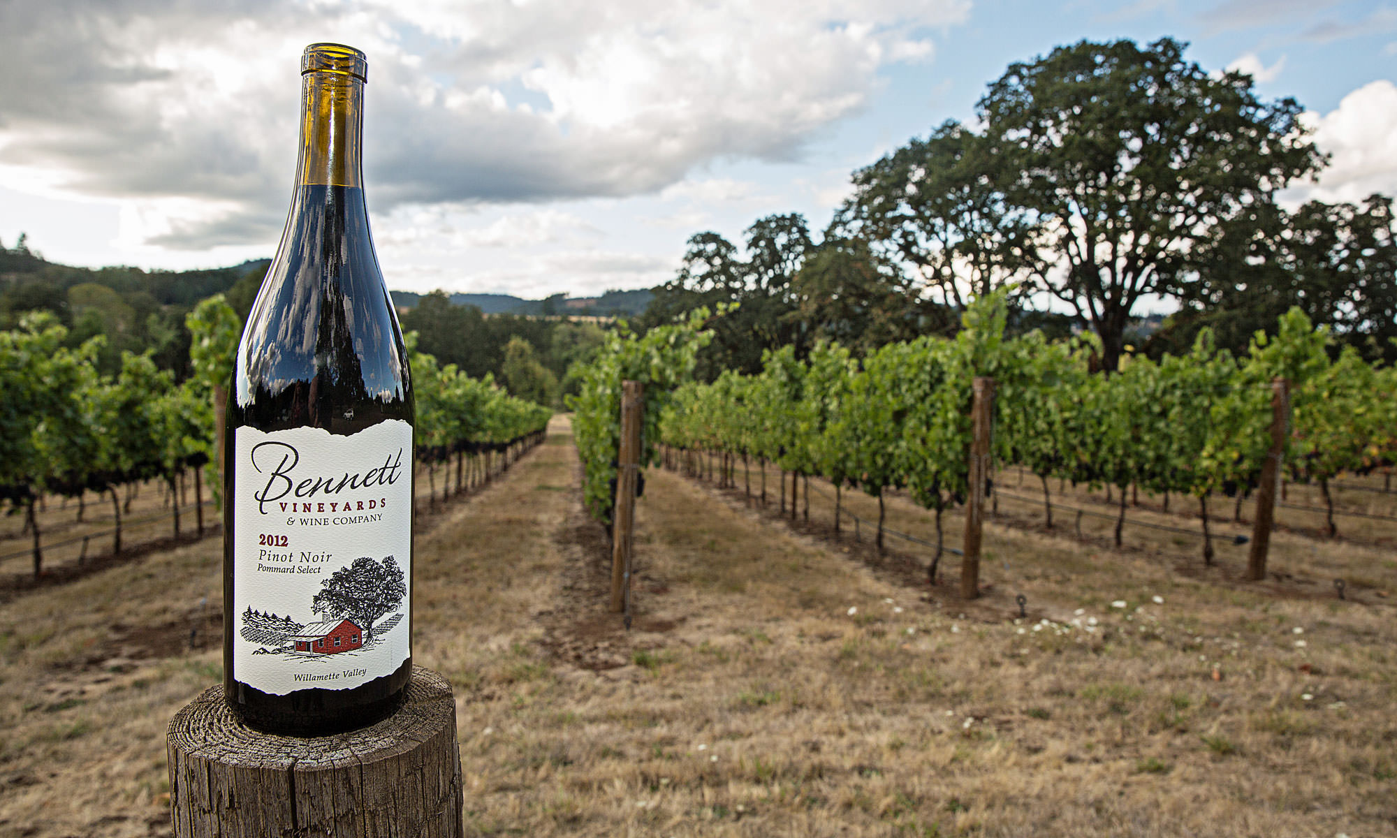A bottle of Bennett wine stand proudly in front of vines.