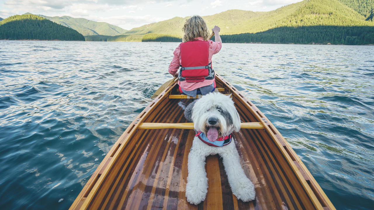 A dog smiles for the camera in the back of a canoe on Detroit Lake.