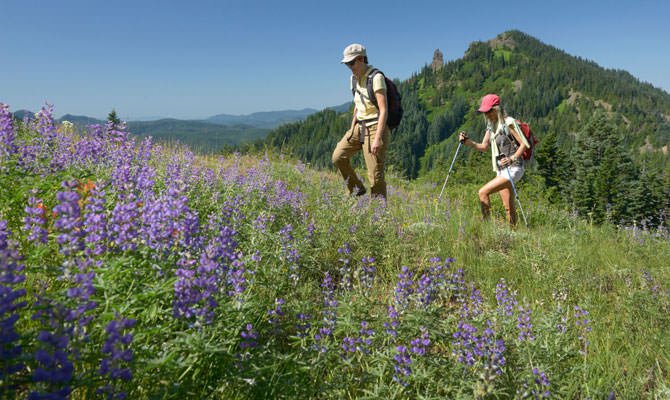 Hikers walk uphill near purple wildflowers on Iron Mountain.