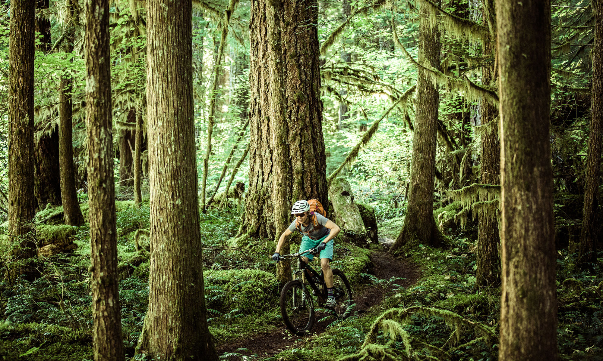 A mountain biker pedals through a mossy forest on a singletrack trail.