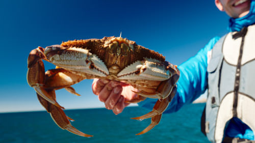 A fisherman holds a fresh-caught crab with blue skies in the background.