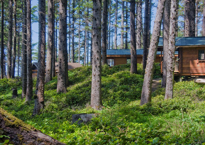 Cabins nestled in a forest