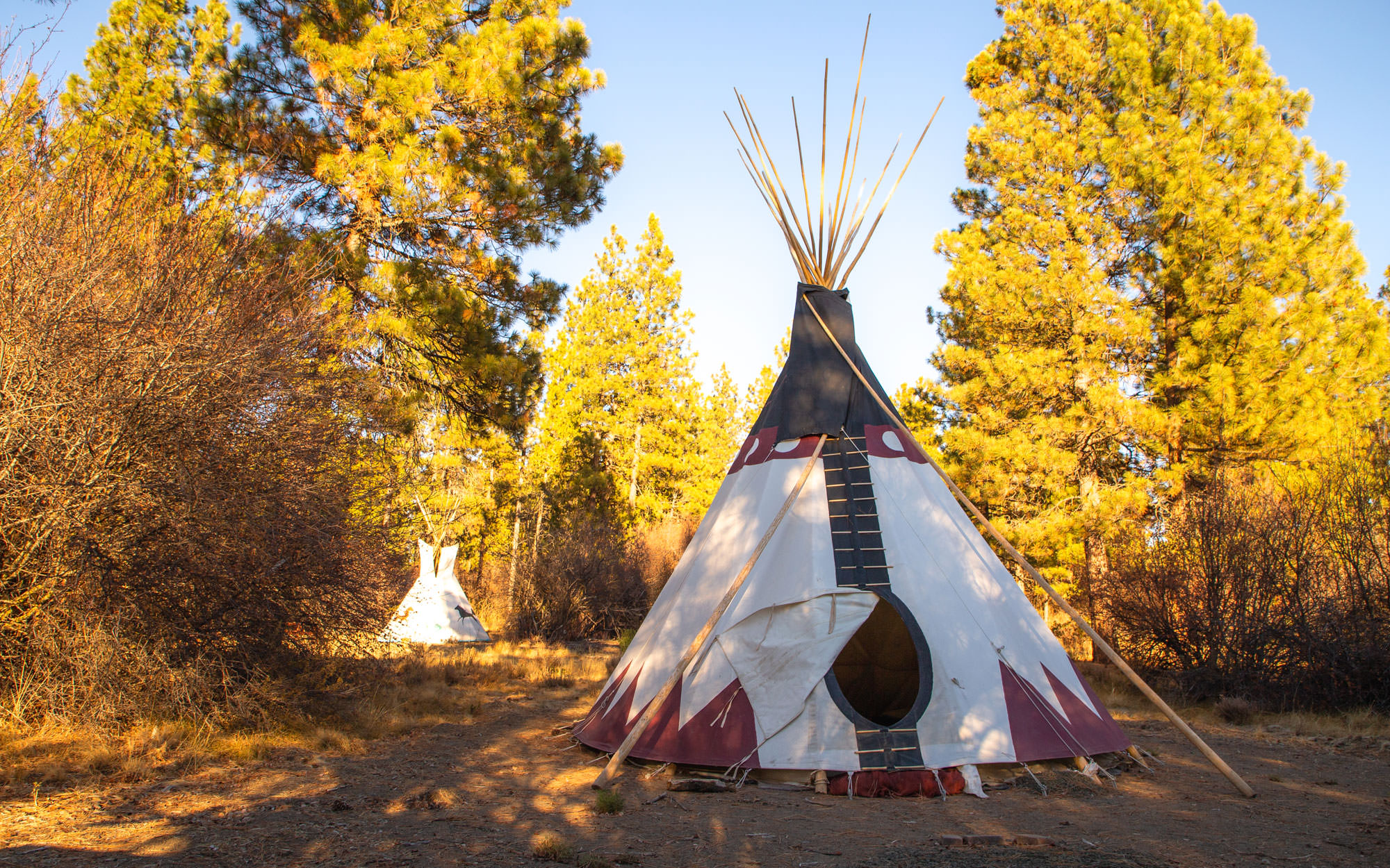 A teepee sits in the foreground surrounded by yellow trees.