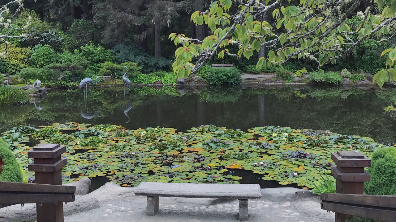 An empty bench sits before a lily pond, complete with lily pads and two bird sculptures.