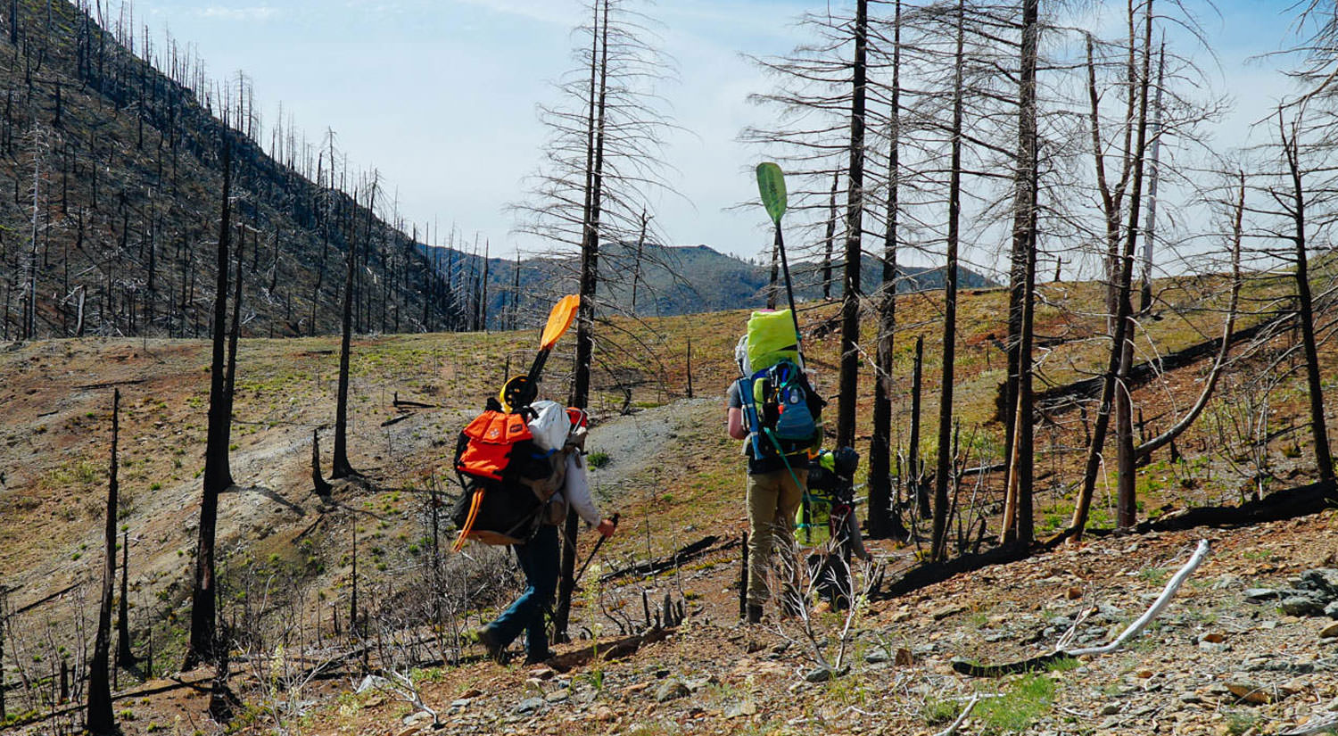 Two people hike with inflatable rafts and paddles on their backs through tree regrowth.