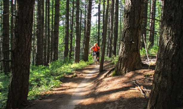 A man in orange pedals a mountain bike through a forest.