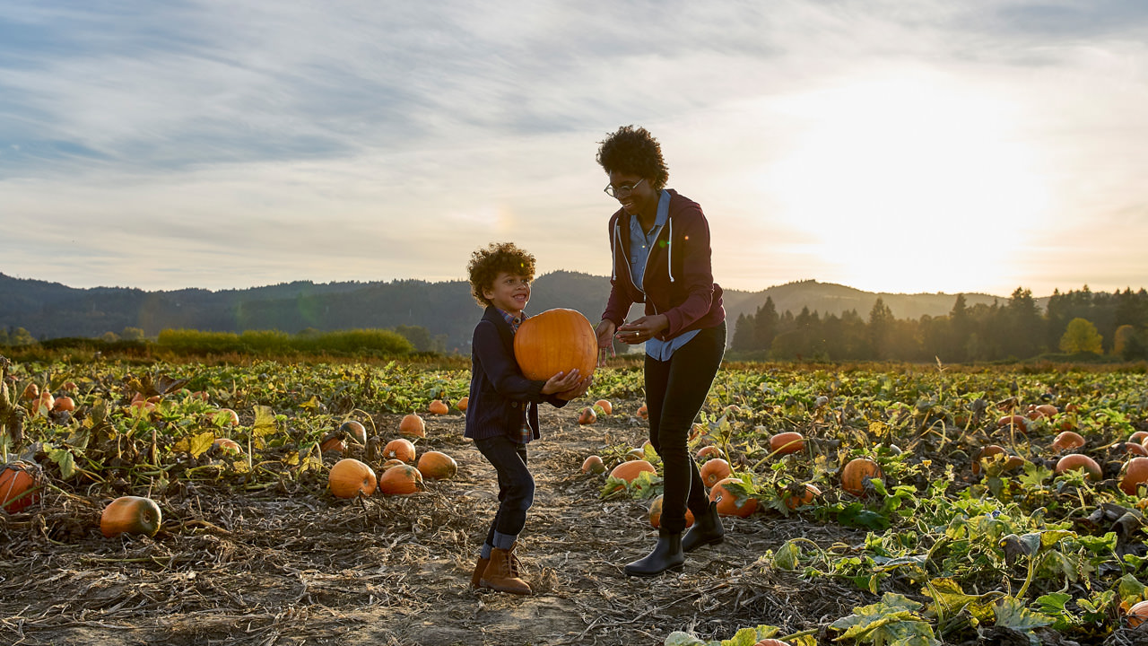 A boy lifts up a large orange pumpkin in a Sauvie Island pumpkin patch as he mother smiles and tries to help.