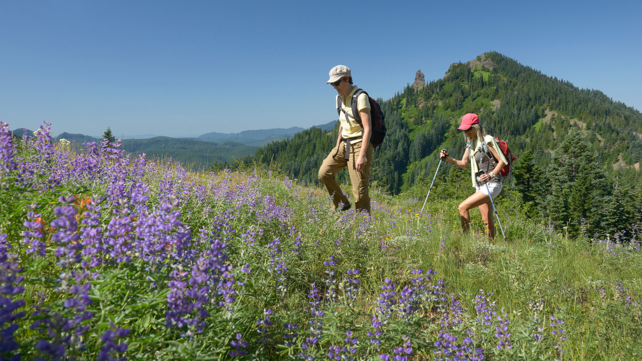 A man and woman, both wearing hats, hike up a grassy hill dotted with purple and red wildflowers.