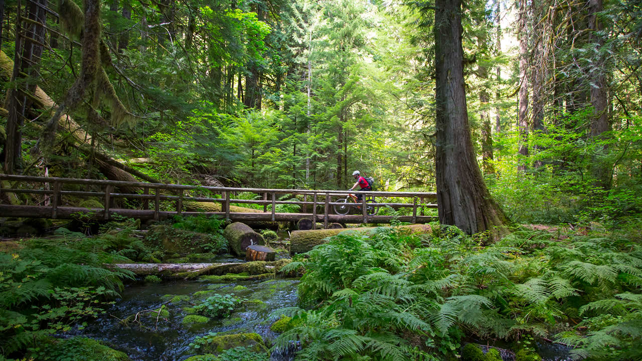 A mountain biker riding over a log bridge in a forest
