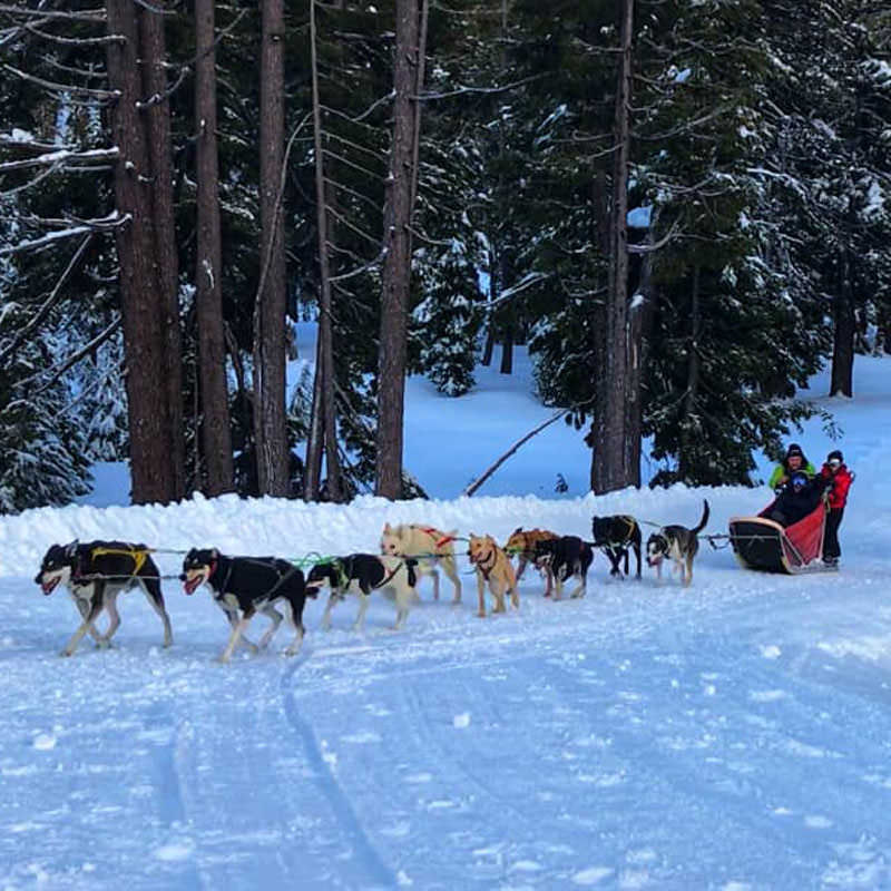 A team of dogs pull a sled with three people.