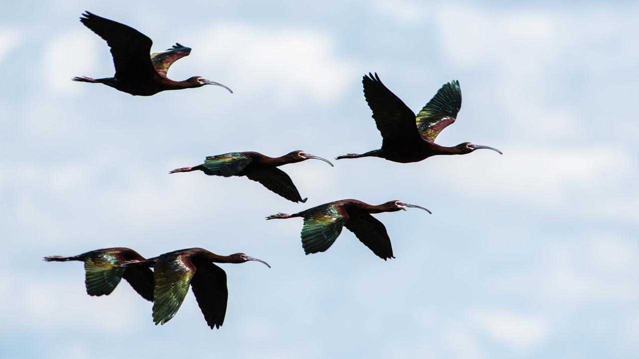 A flock of birds flying through the sky