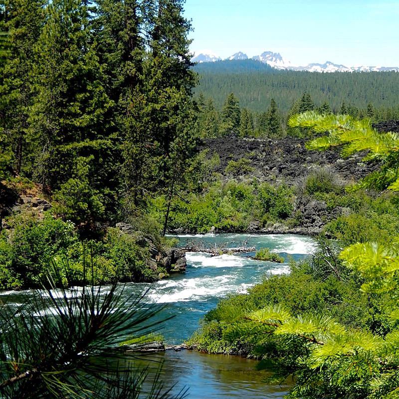 A river runs through a lush tree landscape.
