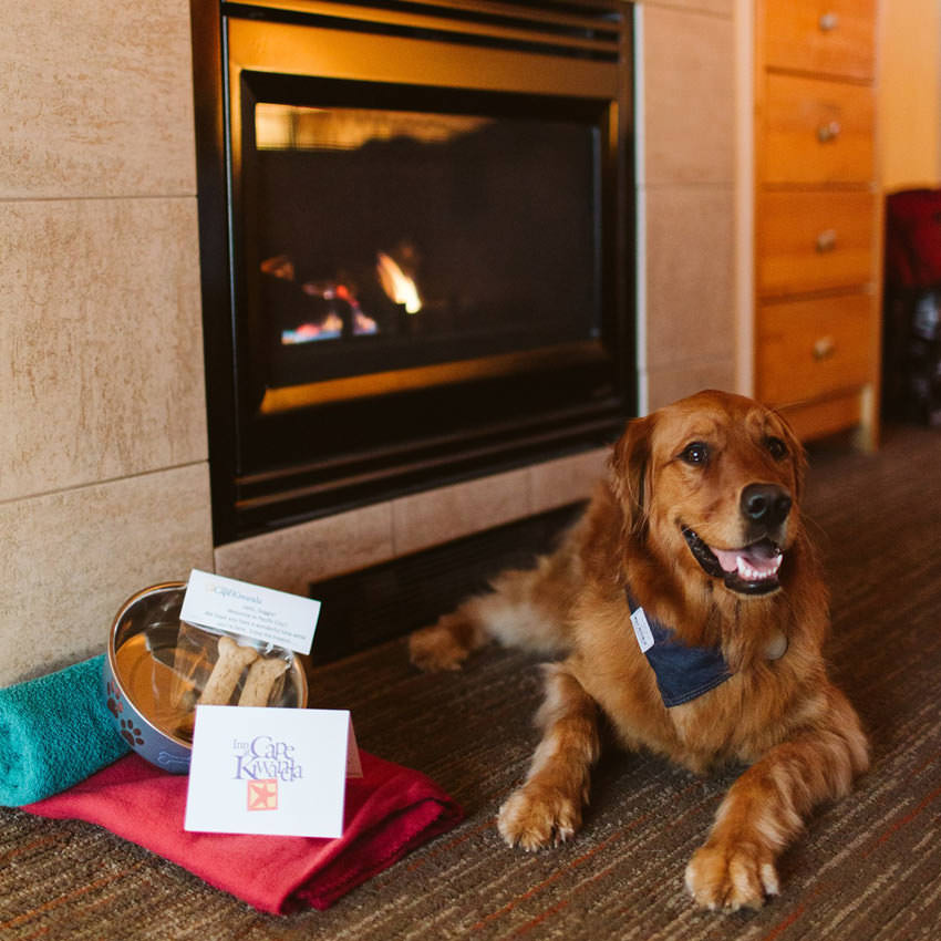A dog sits next to a hotel room's fireplace next to a doggy welcome basket that includes a bowl, treats and towels