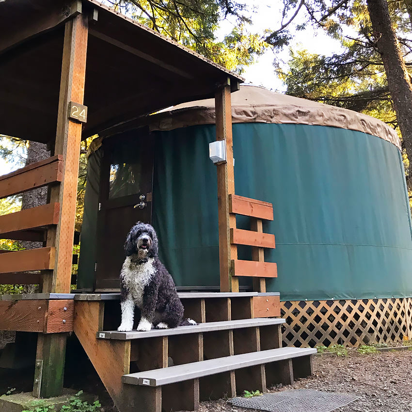 A dog sits on the steps outside of a yurt