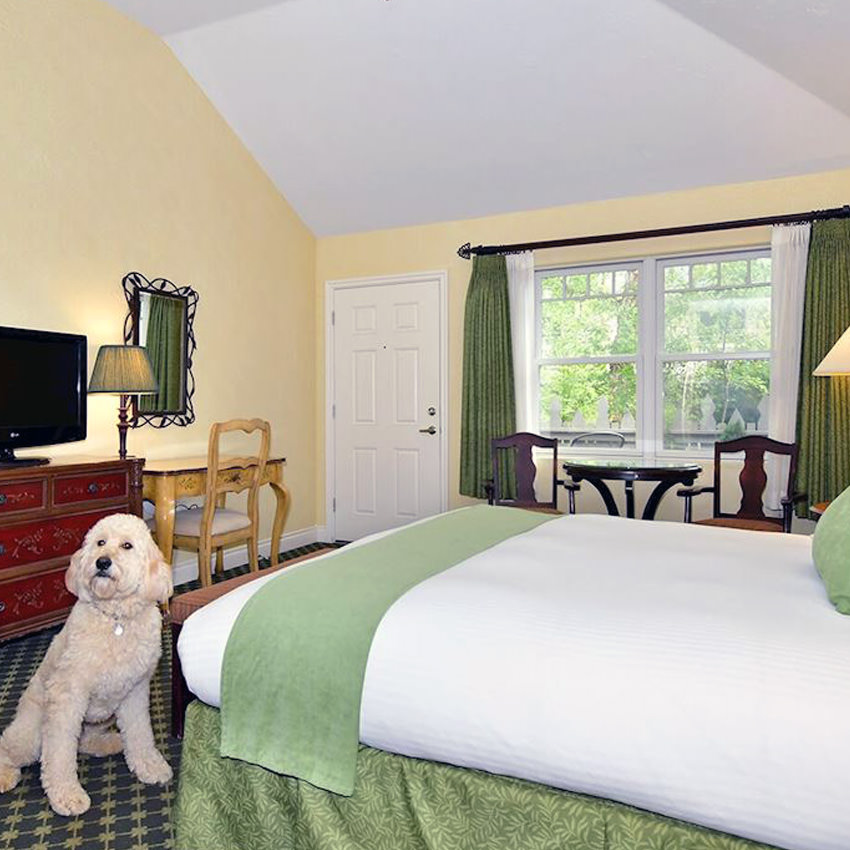 A dog sits on the floor of a hotel room