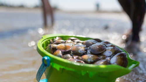 Best spots to catch a DIY fresh seafood dinner? Find out at a clamming or crabbing clinic this summer.