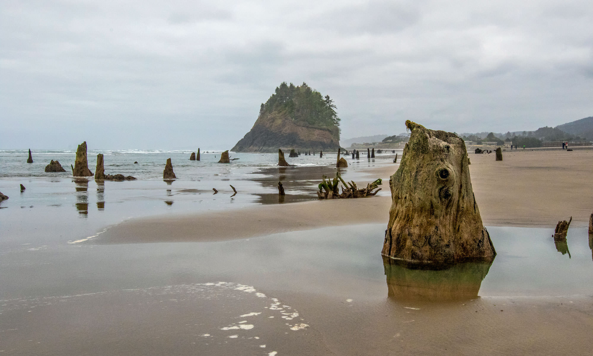 Tree stumps emerge from the shoreline at low tide, with the impressive Proposal Rock in the background.