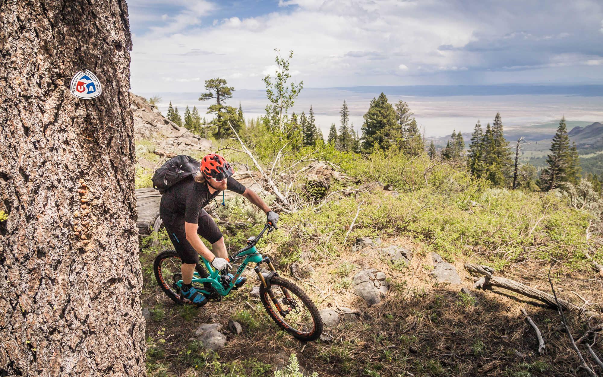 A mountain biker weaves around a tree down singletrack.