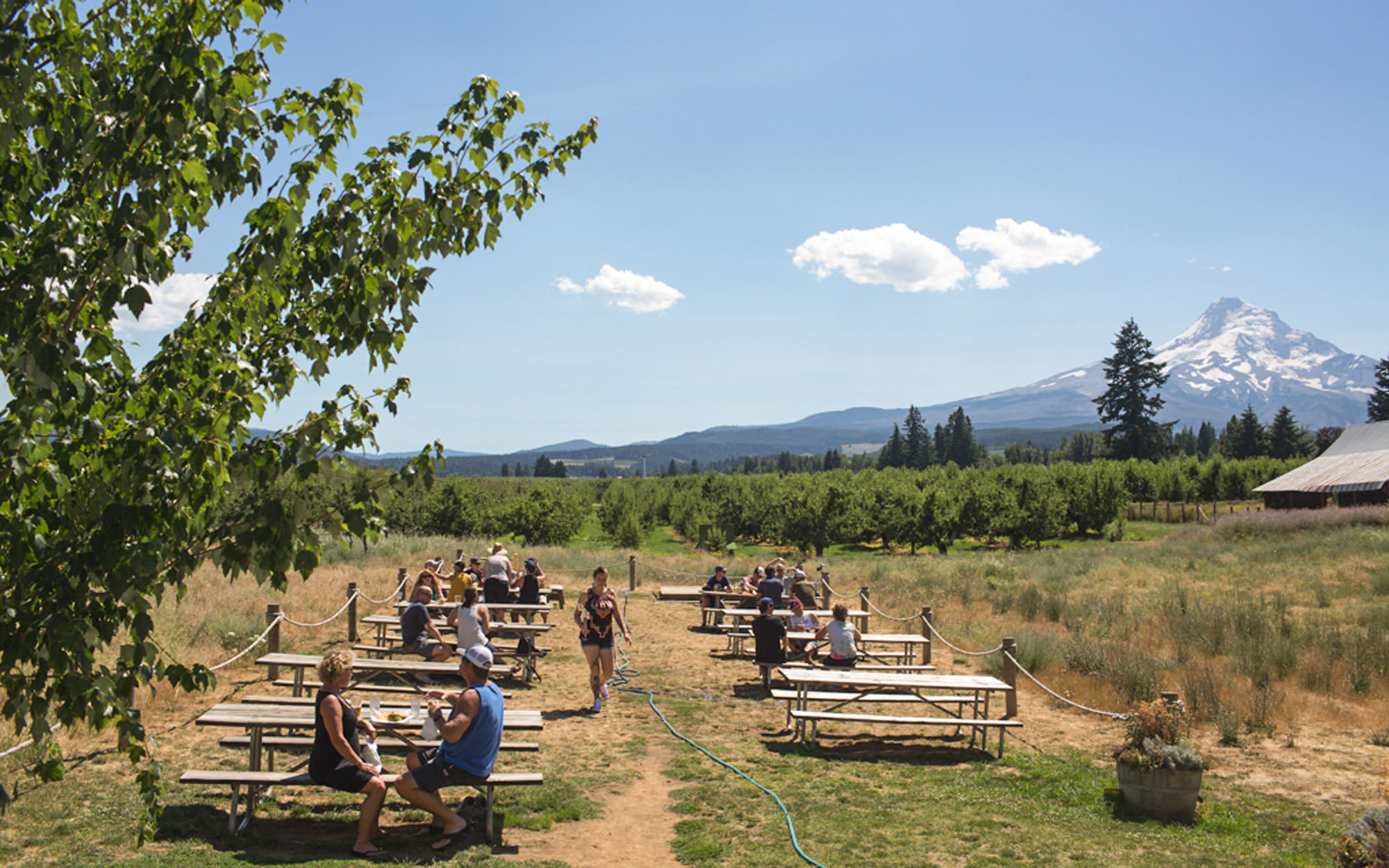Picnic tables on a farm, with Mt. Hood in the backdrop, provide an idyllic resting point.