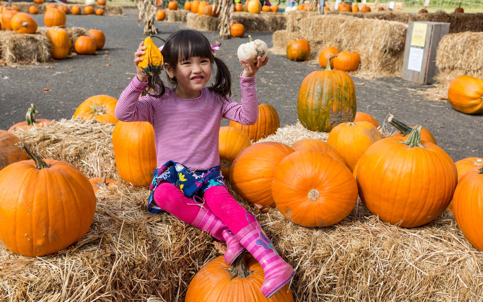A little girl holds up small pumpkins as she sits on hay piles surrounded by large orange pumpkins.