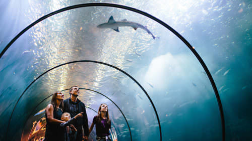 The Oregon Coast Aquarium in Newport one of the Coast's biggest attractions, with close-up views of marine life for all ages to enjoy.